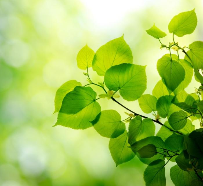 若返り、美容、健康維持、安産効果、生理痛緩和などなど……植物の葉に秘められた驚異のパワー