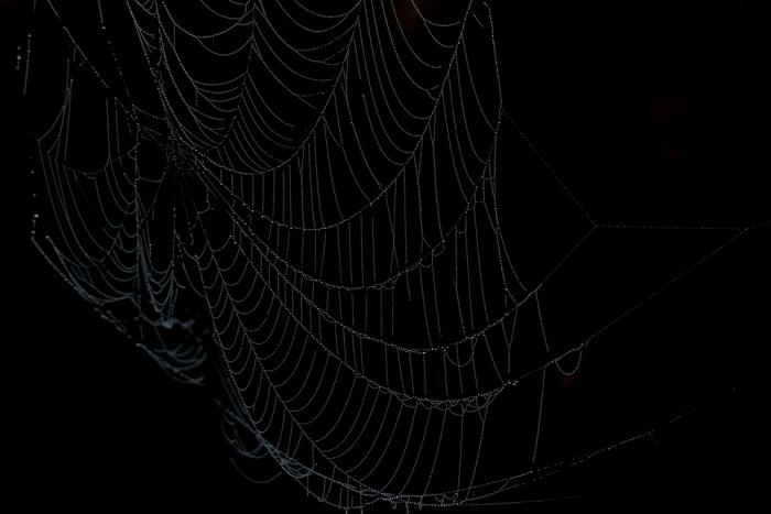 モノノケ④『クモ』<br>〜すべてが閉鎖的になってきたら〜