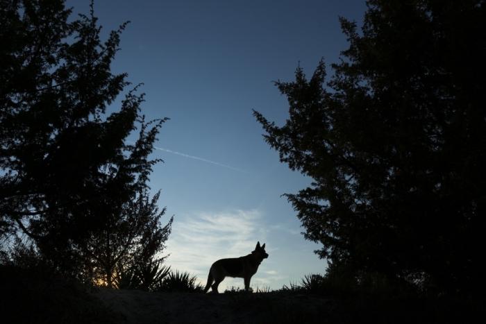 モノノケ⑤『オオカミ』〜荒々しいチカラ(暴力)と破壊の世界を求めるようになってきたら〜