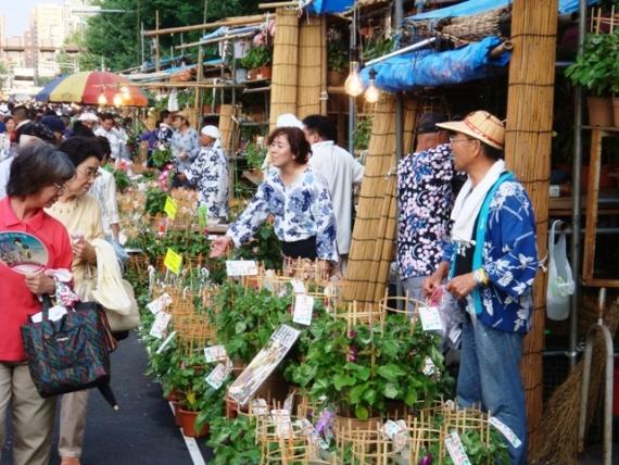 Asagao_Festival_002