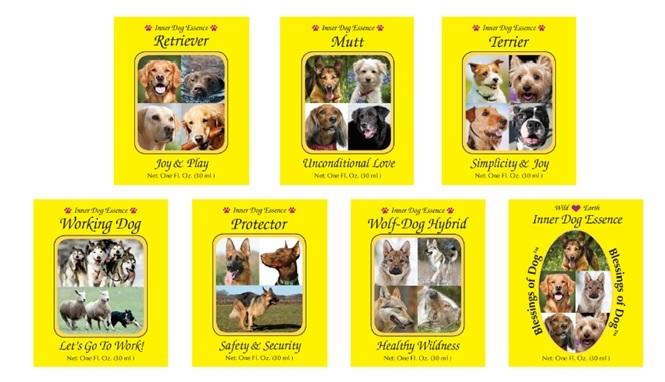 日本新発売の犬のインナードッグエッセンス〜久慈悟子が教えるアニマルエッセンスPart.32