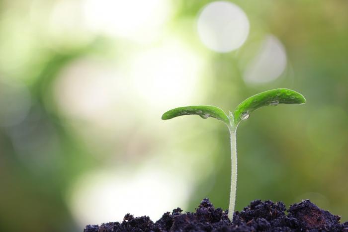 浄化のプロセスを楽にする方法 その2 ~自己肯定感を上げる秘訣とは……?~