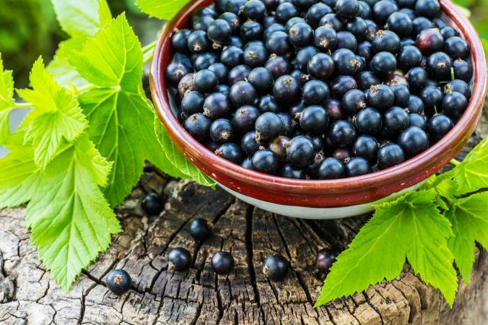 万病に効く秘薬、若返りに効果ありと記された「カシス」とは? ~多くの栄養素をバランスよく含む理想的なスーパーフルーツ~