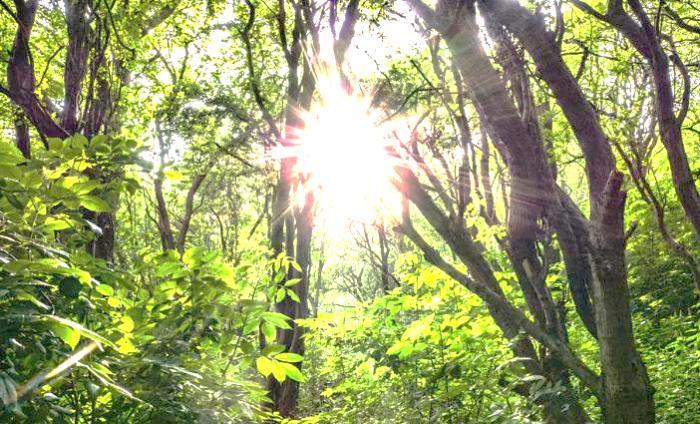 神社カフェ発信 タロットについて5 「日・太陽」前半 〜「現実的な意識」の限界〜
