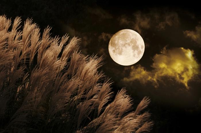 《15日は十五夜 中秋の名月》〜ツキ(幸運)を招く日、たくさんの美しい花を咲かせましょう〜