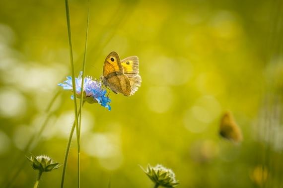 meadow-1622940_960_720