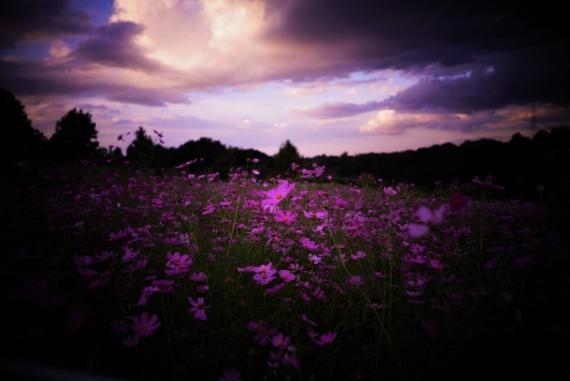 photo by hamaguchi yoshiyuki