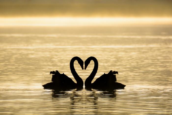 """「愛はあなたとすべてをつなぐ架け橋だ」ルーミー〜 """"Love is the bridge between you and everything."""" RUMI"""