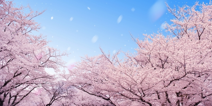 あなたの「桜」の香りを作る特別な方法<br>〜自由な表現を楽しむ