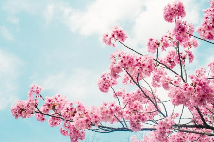 2017年春分の日から降り注ぐ光の影響は⁉︎ <br>自分らしく生きるために