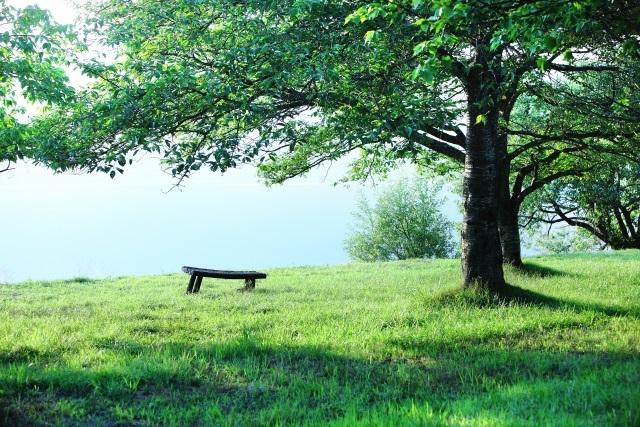 人との調和を重んじる? 自然体な自分でありたい? 最近グリーンが気になる人