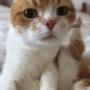長生きする動物は本当に幸せ?  ~ ペットの長生きを願うのは人のエゴでしかないのかも~